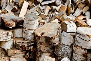 brennholz birke pflanzen f r nassen boden. Black Bedroom Furniture Sets. Home Design Ideas