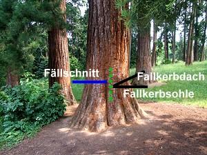 wie lange bäume fällen